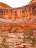 Verlassen Sie Klippe des roten Sandsteins mit Baum und Bogen Stockfotos