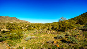 Verlassen Sie Landschaft mit Saguaro-Kakteen entlang der nationalen Spur nahe San Juan Trail Head in den Bergen des Südgebirgspar lizenzfreies stockfoto
