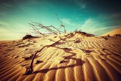 Verlassen Sie Landschaft mit toten Anlagen in den Sanddünen unter sonnigem Himmel Stockfoto