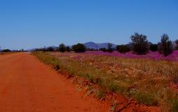 Verlassen Sie Straße und Feld von breitblättrigen Parakeelya-Blumen im Mittel-Australien stockfoto