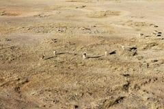Verlassen Sie wilde Natur der Sandwüste und Grünpflanzedürre des Grases im Freien im Afrika-Fotografiematerial in Innere Mongolei Lizenzfreies Stockbild