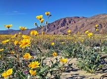 Verlassen Sie Wildflowers in der Blüte mit Blick auf die Berge im Abstand Lizenzfreie Stockfotografie