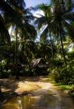 , verlassend vom Dschungel Lizenzfreie Stockfotografie