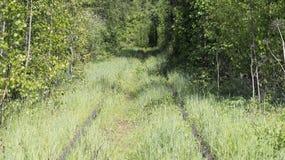 Verlassene Eisenbahn im Wald über dem Fluss Lizenzfreie Stockfotos