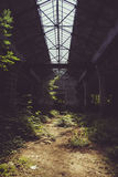 Verlassene Fabrik und grüne Vegetation Stockbilder