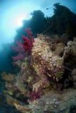 Verlassene Fischereizeilen auf einem gesunden Korallenriff stockfoto