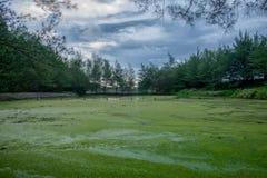 Verlassene grüne Natur Stockfotografie