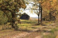 Verlassene hölzerne Scheune auf dem Gebiet nahe Wald im Herbst Lizenzfreies Stockfoto