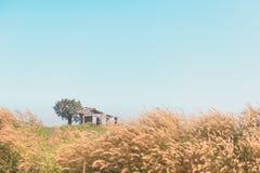 Verlassene Hütte mit grünem Baum, Gras und Poaceae in der Pastellfarbe Stockfotos