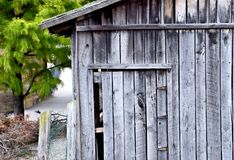 Verlassene Halle mit Kiefer Stockfoto