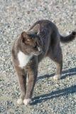 Verlassene Katze, die in camera schaut Wilde und obdachlose Katze auf Stein Stockbild