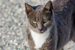 Verlassene Katze, die in camera schaut Wilde und obdachlose Katze auf Stein Lizenzfreie Stockfotos