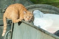 Verlassene Katze, die nach Lebensmittel im Müllcontainermülleimer sucht, um auf der Straße zu essen Lizenzfreie Stockfotografie