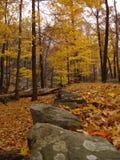 Verlassene Straße abgedeckt durch Laub auf Harriman Nationalpark, NY.   stockbilder
