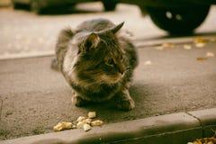Verlassene Straßenkatze und Lebensmittel (Adobe RGB) Stockfotografie
