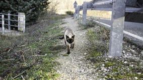 Verlassene Straßenkatzen Stockfoto