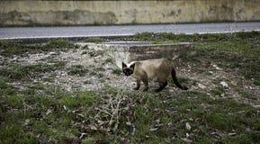 Verlassene Straßenkatzen Lizenzfreie Stockfotografie