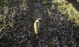 Verlassene Straßenkatzen Stockbild