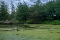 Verlassene und überschwemmte grüne Natur Lizenzfreies Stockfoto