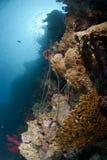 Verlassene ungültige Fischereizeilen auf einem Korallenriff Lizenzfreie Stockfotografie