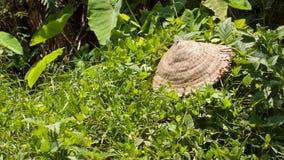 Verlassener asiatischer konischer Hut auf Grünpflanzen Lizenzfreies Stockfoto
