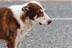 Verlassener einsamer Hund Lizenzfreie Stockbilder