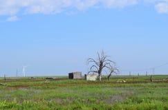 Verlassener hölzerner Bretterbude- und Sturmkeller in ländlichem Texas Panhandle lizenzfreies stockfoto