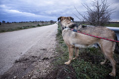 Verlassener Hund Stockfoto