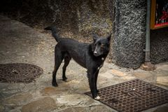 Verlassener Hund Lizenzfreie Stockfotografie