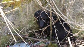 Verlassener Hund in der Müllkippe stockfoto