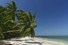 Verlassener Palme-eingesäumter tropischer Strand Lizenzfreie Stockbilder