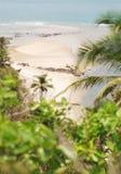 Verlassener Strand Ansicht durch Palmblätter Stockfoto