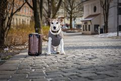 Verlassener und verlorener Hund Stockfotos