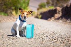 Verlassener und verlorener Hund Stockfoto
