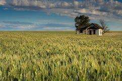 Verlassenes Bauernhaus umgeben durch Weizen Stockbild