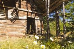 Verlassenes Blockhaus und Gänseblümchen Stockbilder