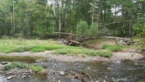 Verlassenes Boot unter Baum Stockfoto