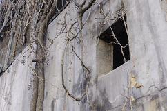 Verlassenes leeres Haus und Anlagen lizenzfreie stockfotografie