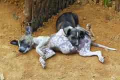 Verlaten daklozen en hongerige honden Royalty-vrije Stock Afbeeldingen