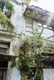 Verlaten de bouwdetail, beschimmelde exteriourmuur en gebarsten, vod Stock Fotografie