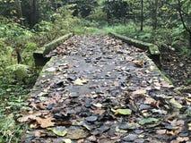 Verlaten de herfstbrug in het hout vaker stock afbeelding