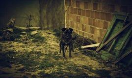 Verlaten gebonden hond royalty-vrije stock foto's