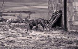 Verlaten gebonden hond stock fotografie