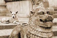 Verlaten hond Stock Foto's
