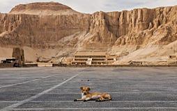 Verlaten hond met tempel van hatshepsut op de achtergrond royalty-vrije stock foto