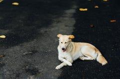 Verlaten honden Royalty-vrije Stock Afbeelding