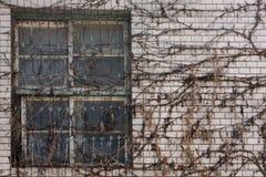 Verlaten huis met droge klimplant Royalty-vrije Stock Foto's