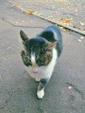 Verlaten kat De herfst royalty-vrije stock fotografie