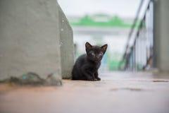 Verlaten kat in de straat stock fotografie