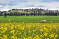 Verlaten landbouwbedrijfhuis op gebied van Canola Royalty-vrije Stock Afbeeldingen